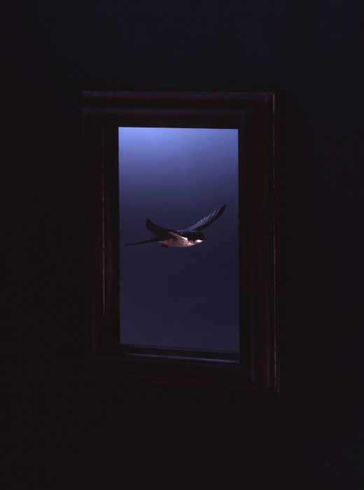 Swallow in the frame001
